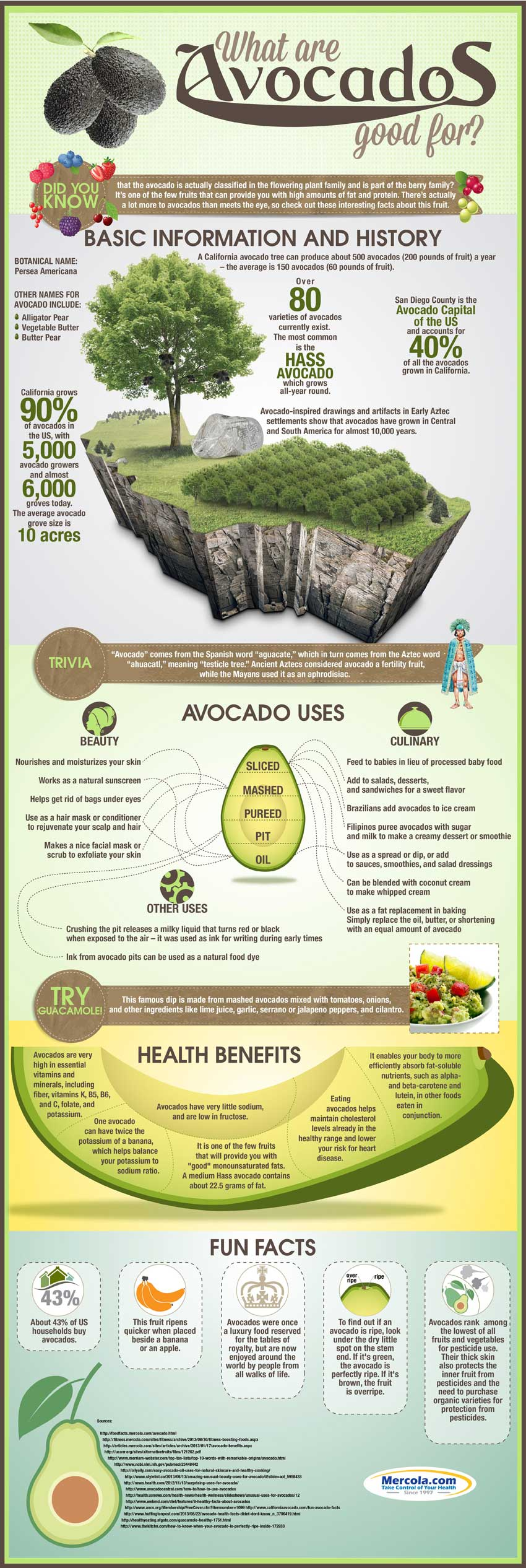 15 Benefits of Using Avocados for Health and Beauty Infographic