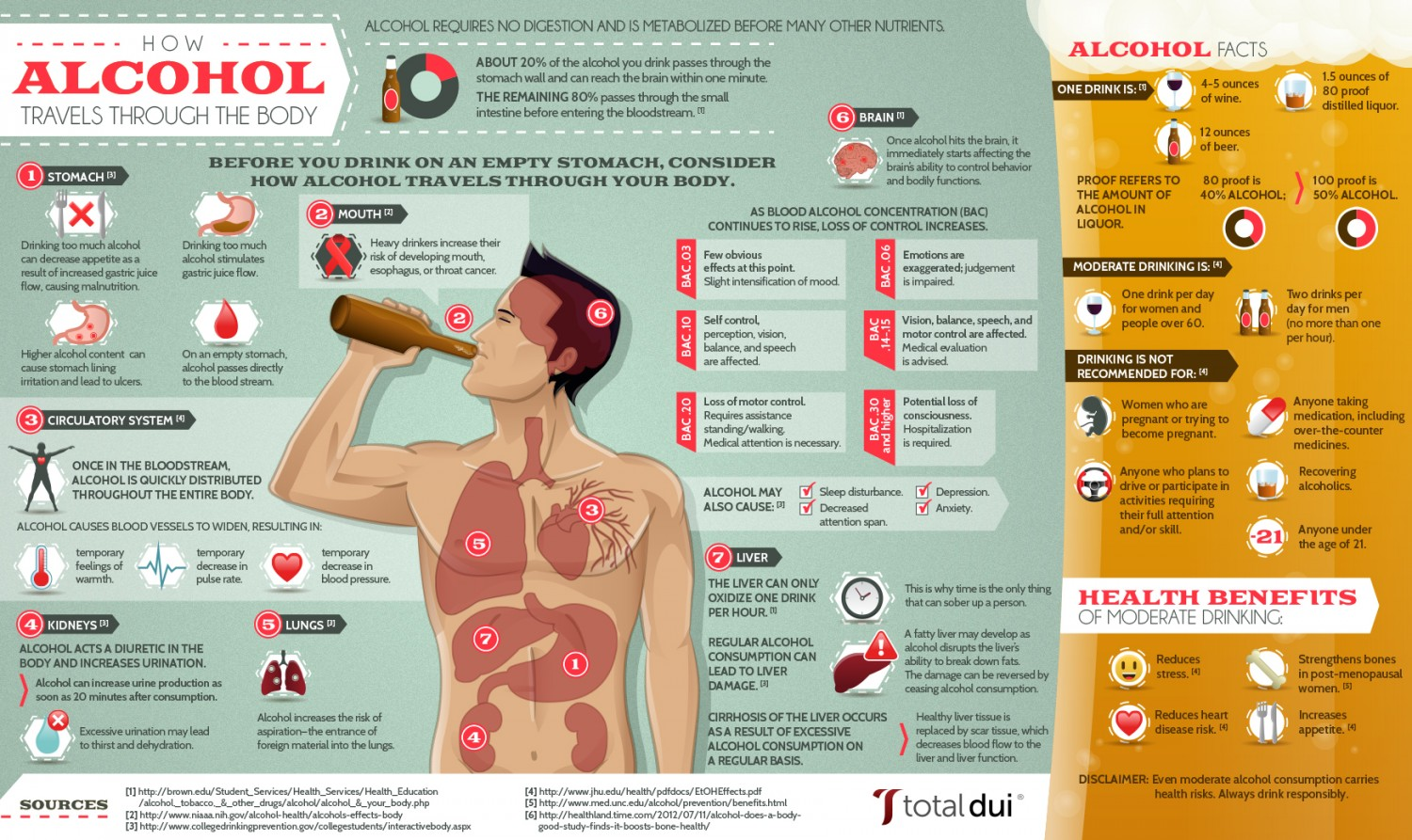 How the body reacts to alcoholic beverages infographic