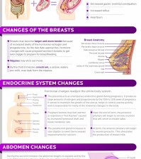 Changes that a womans' body goes through when she is pregnant infographic