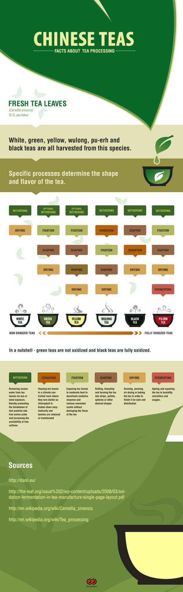 True Facts About Chinese Tea Infographic