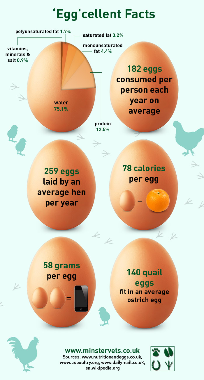 True Facts About Eggs Infographic