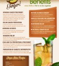 10 Amazing Benefits Of Ginger Infographic