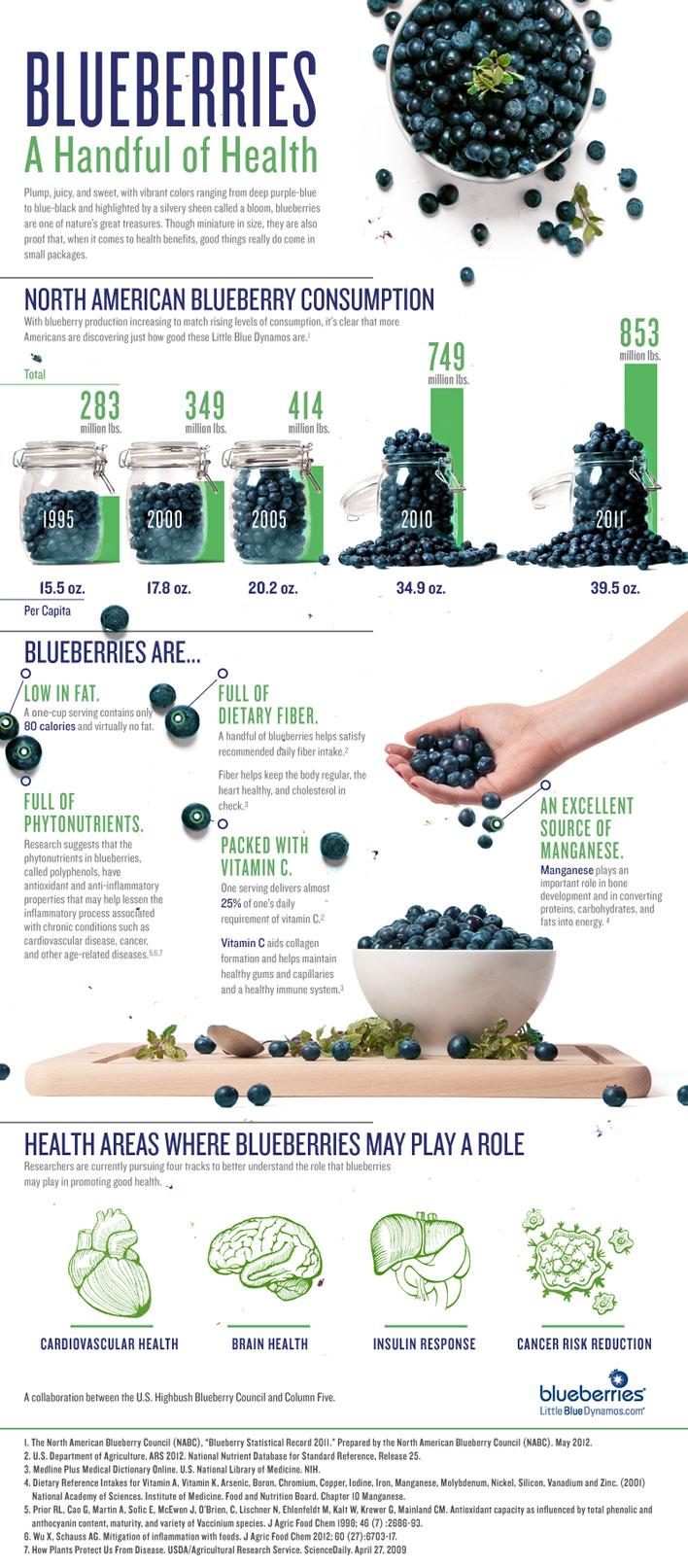 9 Blueberry Benefits Infographic