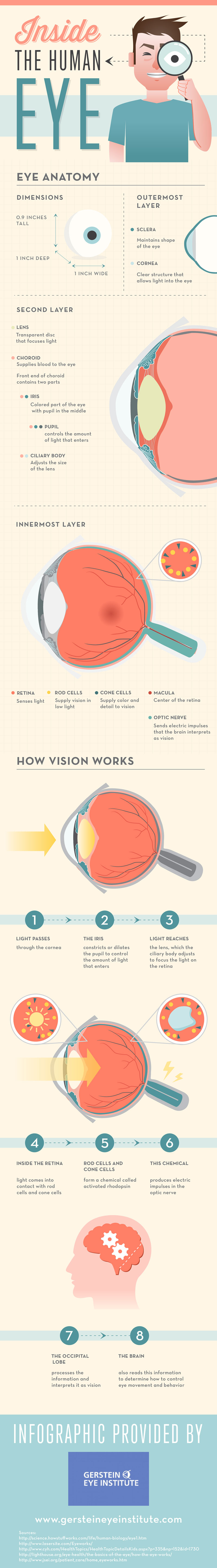 Look Inside The Human Eye Infographic