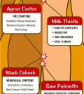 Herbal Medicines Guide Infographic