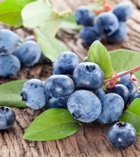 Blueberries with leaves on a wooden table. Studio isolated.