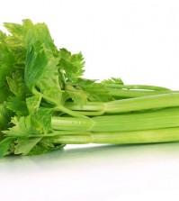 Fresh green celery isolated