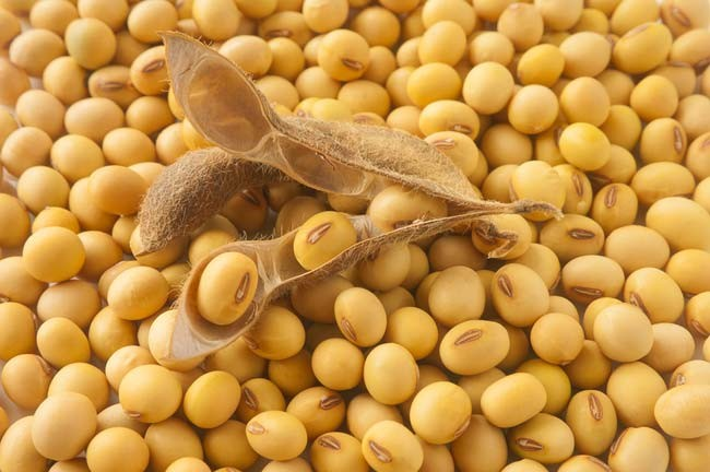 soy_soybeans