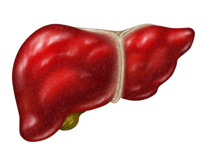 Human Liver