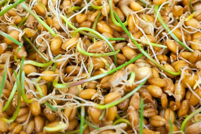 Wheat germs. Macro