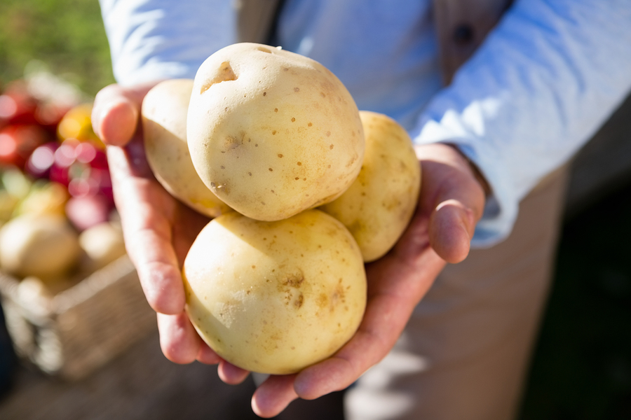 Mid section of farmer holding fresh potatoes