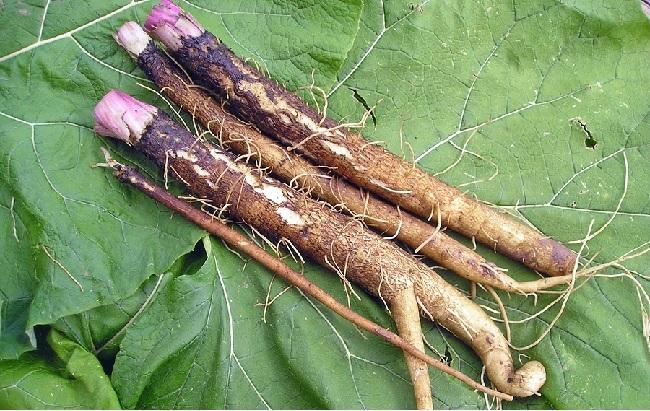 Top 20 Anti Cancer Herbs And Plants Naturalon Natural