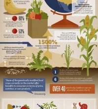Say NO To GMO Infographic