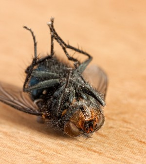 how to get rid of houseflies at home