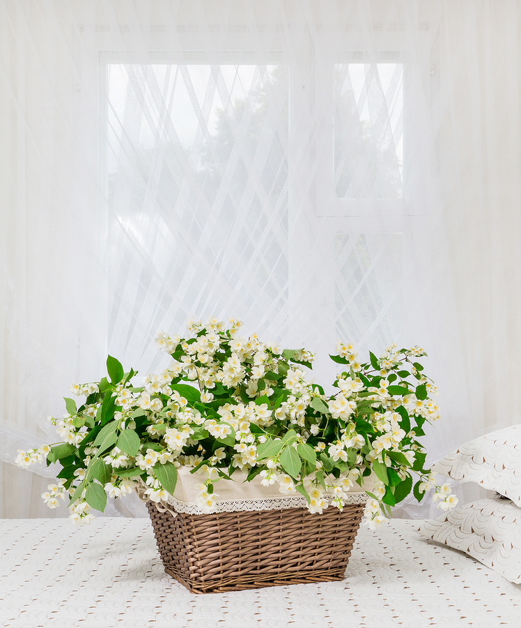 12 Of The Best Plants For The Bedroom For Cleaner Air And