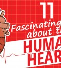 11 Incredible Facts About The Human Heart Video