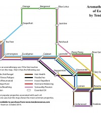 Aromatherapy Road Map Of Essential Oils Infographic