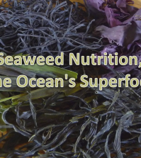 Seaweed, An Ocean Superfood For Better Health Video
