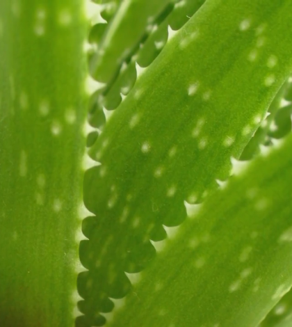 Aloe Water: Everything You Need To Know About This Miracle Drink Video
