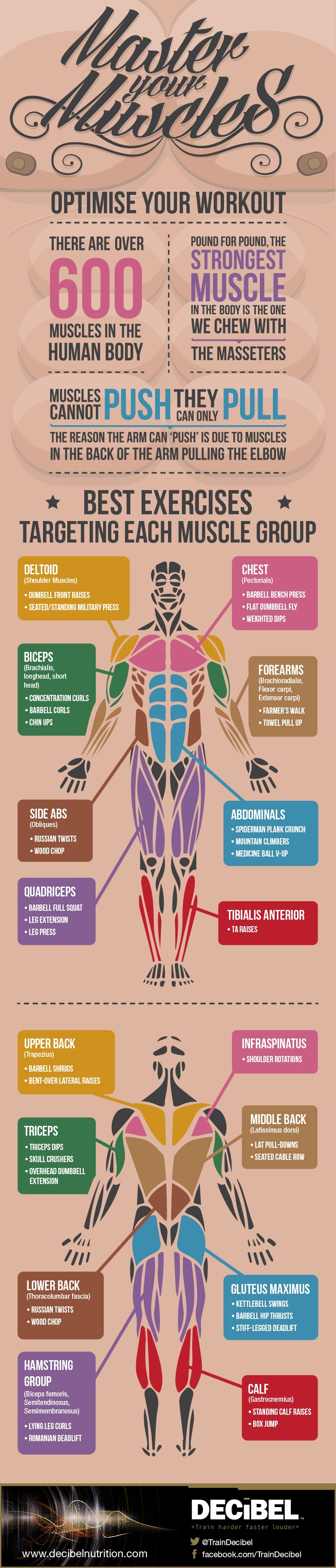 Optimize Your Workout To Tone All Muscles Infographic