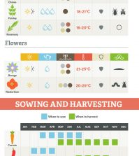 14 Best Edible Plants To Grow Indoors Infographic