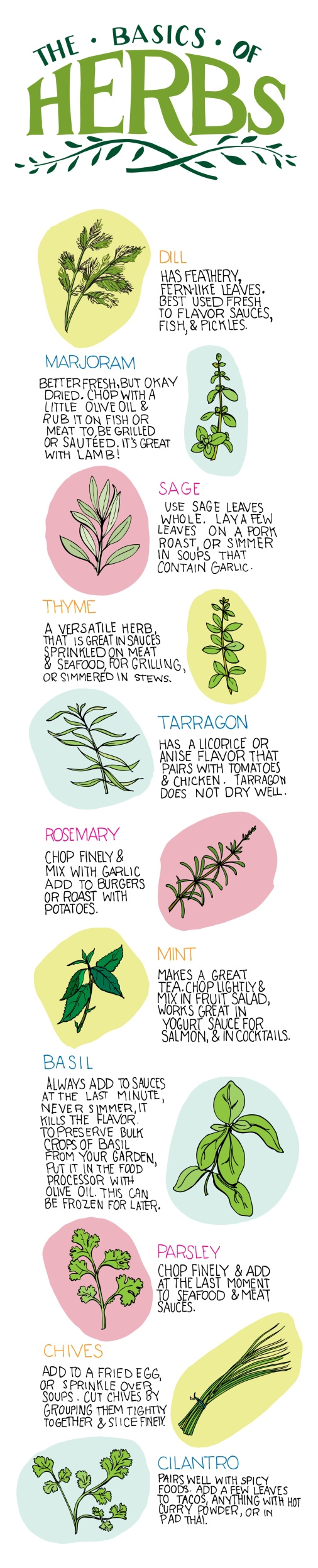 The Basics of Herbs For Beginners Infographic