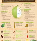 Everything There Is To Know About Coconut Uses Infographic