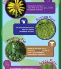 Why Your Home Needs Indoor Plants More Than You Think Infographic
