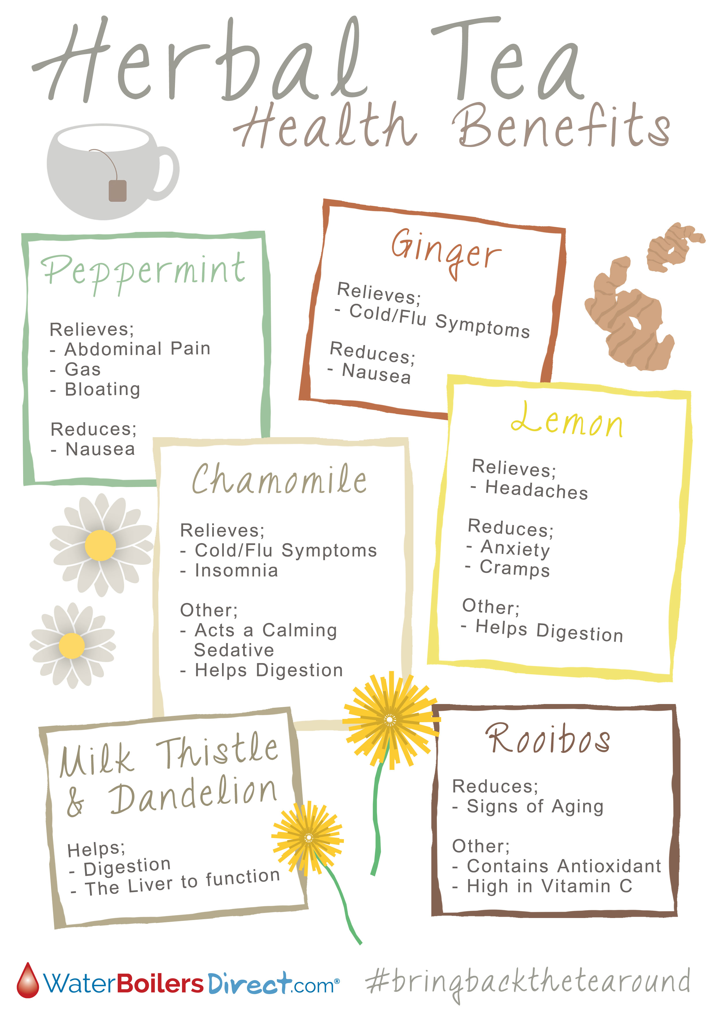 Chamomile, Ginger Or Peppermint? Health Benefits Of Herbal Tea Infographic