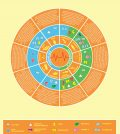 Top 10 Essential Foods For Optimum Endurance Infographic