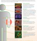 The Wonders Of Food: How They Keep You Healthy Infographic