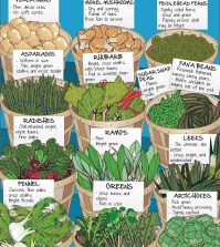 Your Guide To Picking The Best Spring Produce Infographic