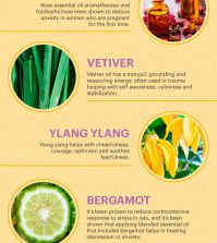 Top 7 Essential Oils That Can Help You With Anxiety Infographic