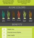 All About Algae: Superfood Facts And Health Benefits Infographic
