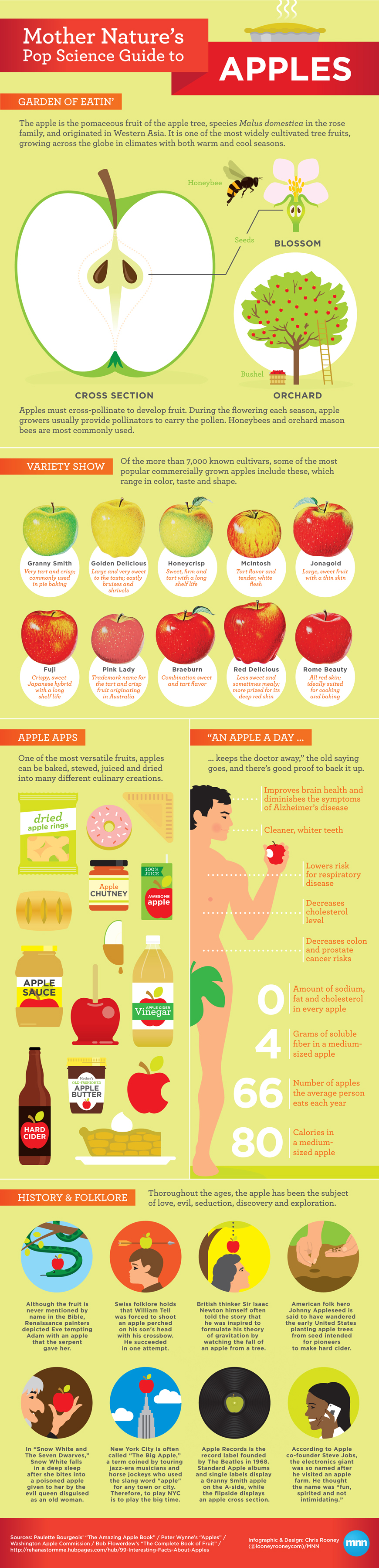 A Comprehensive Guide To Apples Infographic