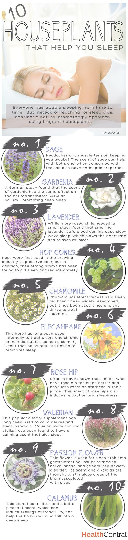 10 Houseplants For Getting Better Sleep Infographic