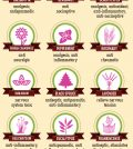18 Essential Oils That Can Relieve Nerve Pain Naturally Infographic