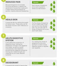 Using Bergamot Essential Oil For Your Health Infographic