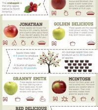 Everything You Wanted To Know About Apples (And Even More) Infographic