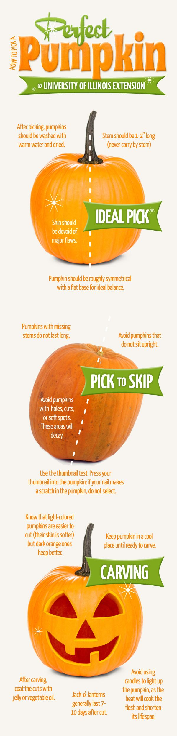 How To Pick And Carve A Perfect Pumpkin Infographic