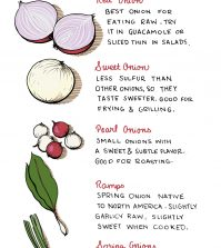 Everything About Onions And Their Diversity Infographic