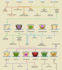 Health Benefits Of All Teas And Tisanes In One Place Infographic