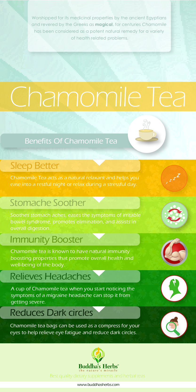 Learn About Health Benefits Of Chamomile Tea Infographic