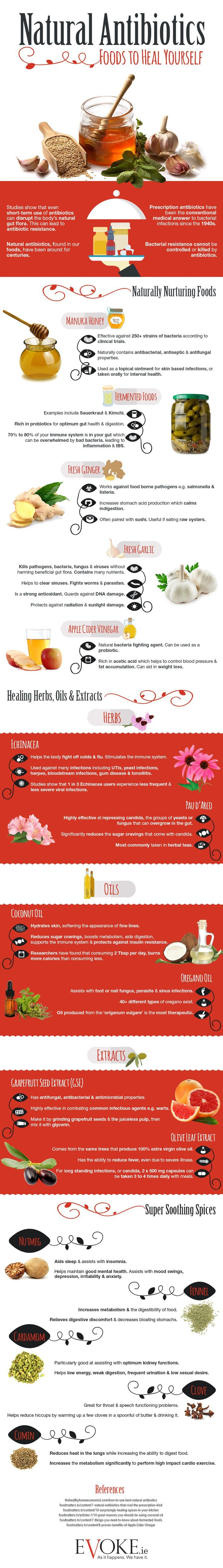 The Best Natural Antibiotics For Drug-Free Healing Infographic