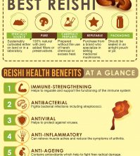 Reishi Mushrooms For Better Health: What You Need To Know Infographic