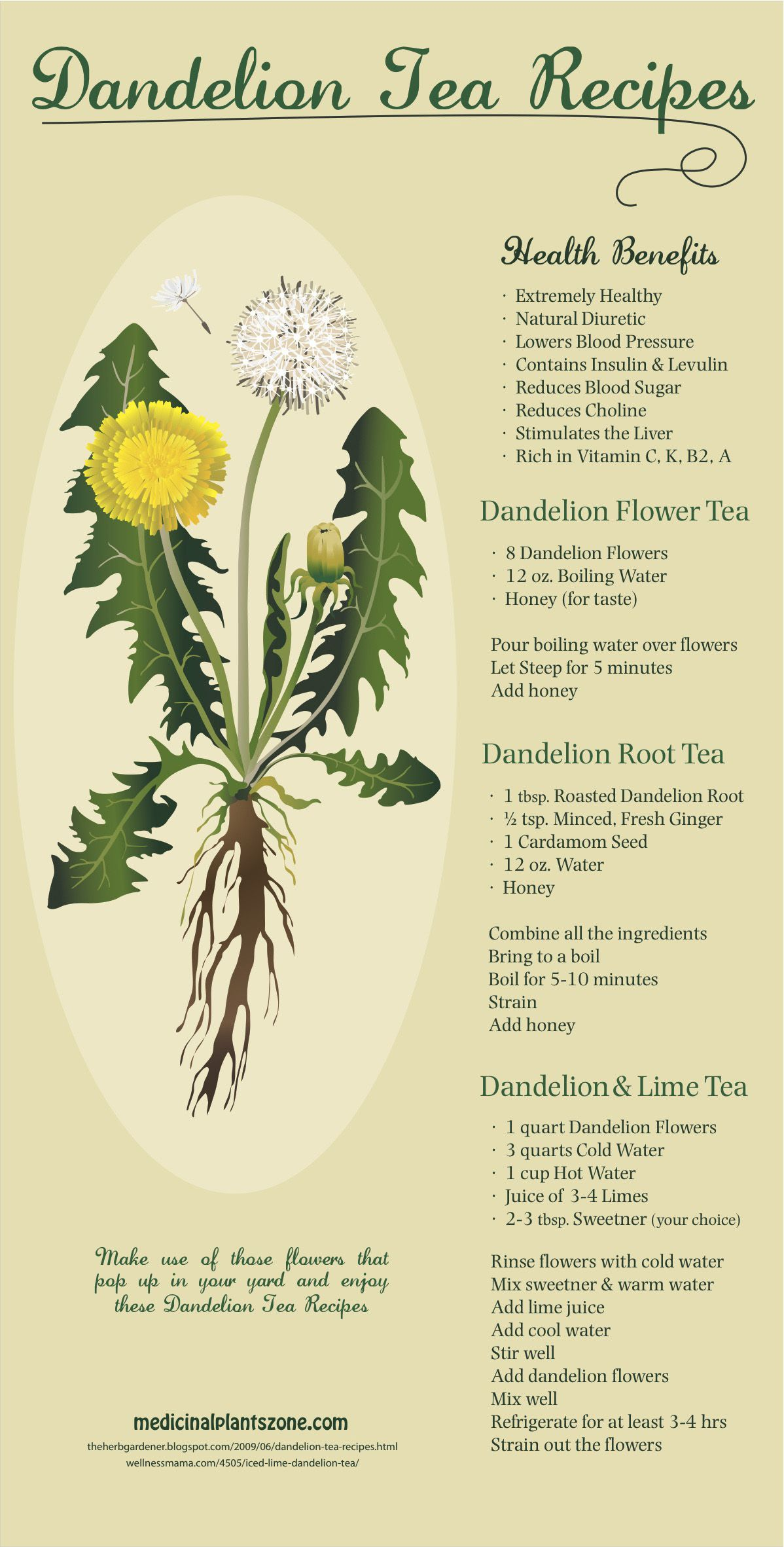 Dandelion Tea Health Benefits And Recipes You Need To Try Infographic
