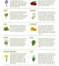 Top 14 Herbs For Natural Health And Beauty Infographic