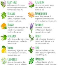 The Best Essential Oils For Women's Health Infographic