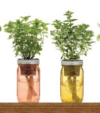 9 Herbs You Can Grow In Water On Your Windowsill Video